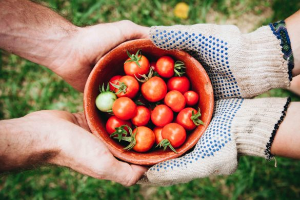 Seasons Food Enterprise Project HEADER elaine-casap-on-unsplash